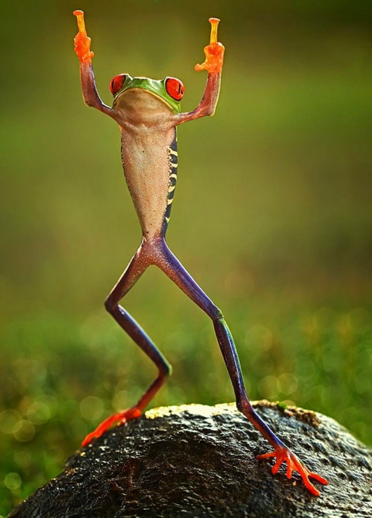 11523210-R3L8T8D-1000-0ashikhei-goh-of-indonesia-frog-flipping-the-double-bird-not-photoshopped-771676.jpg